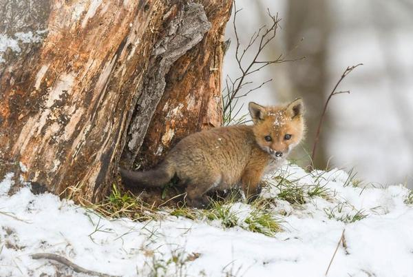 Picture for Wildlife photography contest winners announced