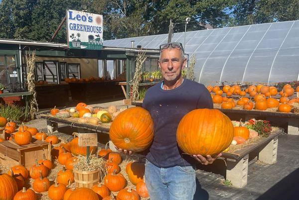 Picture for Tiverton greenhouse owner donates thousands worth of pumpkins, fall décor to schools
