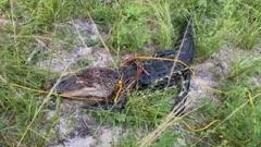 Cover for Teen ties rope around Brevard alligator, Florida wildlife officials say