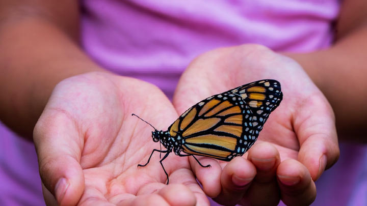 Cover for Butterflies In The Commonwealth: Oak Grove's Annual Butterfly Festival Returns