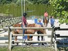 Picture for Harmony Project at Achaius Ranch helps build confidence in kids