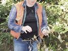 Picture for Sudden oak death a growing concern