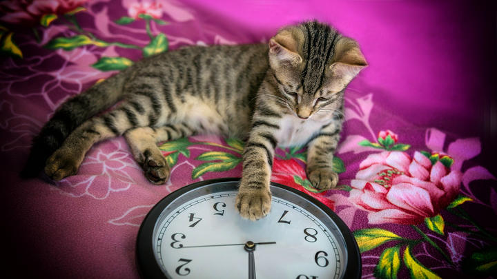 Cover for Could daylight saving time become permanent in Illinois, or be abolished completely?
