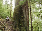 Picture for Brian Mulroney and Greta Thunberg among 100 celebrities pushing to save B.C. old growth