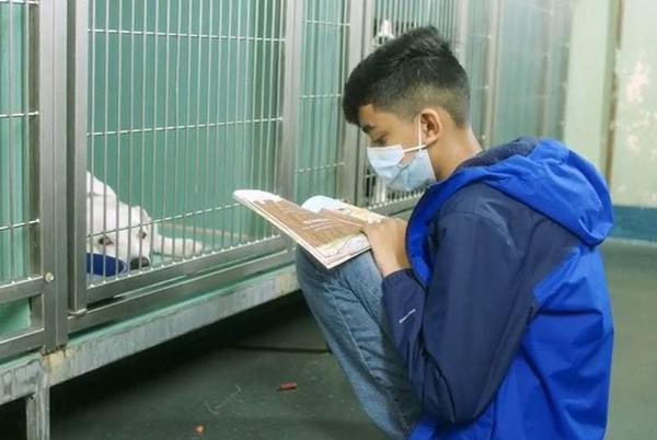 Picture for 11-Year-Old Bronx Boy Brings Love and Hope to Shelter Dogs