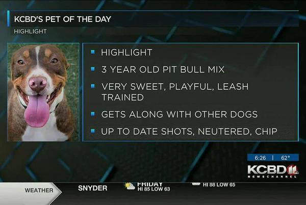 Picture for KCBD's Pet of the Day: Meet Highlight