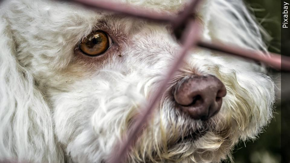 Picture for 85 abandoned dogs found in Idaho home after tenant evicted