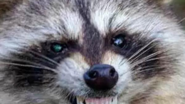 Picture for First Case Of Rabies Confirmed In Polk County