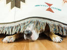 Picture for Fireworks can cause anxiety for dogs. Here's how you can help