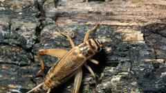 Cover for Discover Nature: Crickets in Missouri