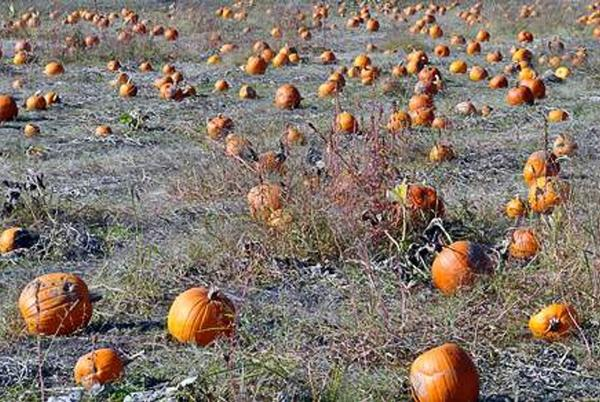 Picture for Fall is in the air, and weekends at the pumpkin patch are back in style