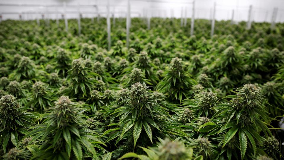 What it means to invest in U.S. vs. Canadian cannabis ...