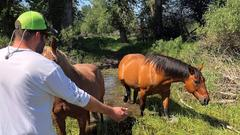 Cover for Montana couple rescues horse from drowning in river