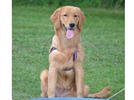 Picture for Pets of the Tri-State 6-19-21