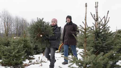 Christmas 2020: Where to Get U Cut and Fresh Trees in the Utica