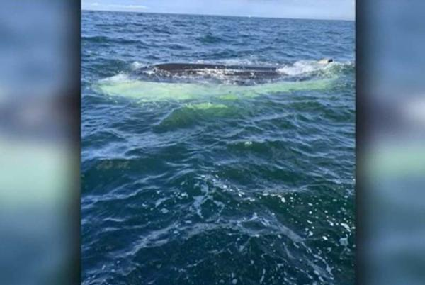Picture for Good Samaritans rescue group from sinking boat in Chatham