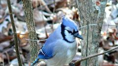 Cover for A Surge Of Mysterious Bird Deaths In West Virginia And The Mid-Eastern U.S. Is Cause For Concern
