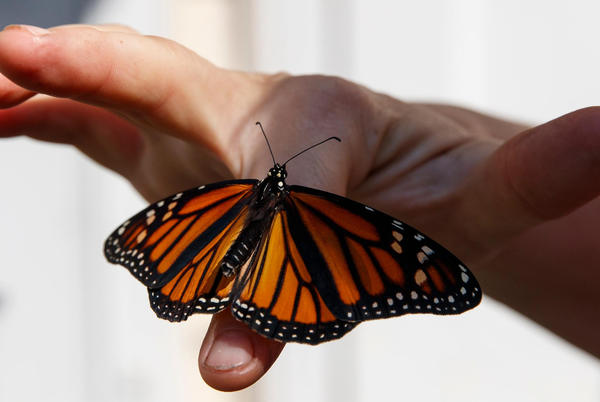 Picture for 8 THINGS TO DO THIS WEEKEND: Movies, music, and monarchs
