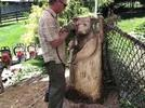 Picture for From a tree stump to a bear cub (video by artist Kris Connors)