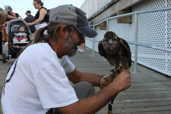 Picture for Ocean City Seagull Contractor Focuses on Another Pest