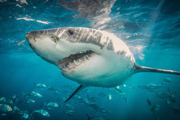 Picture for Rare New Close-Up Photos of Massive Sharks Are Pure Nightmare Fuel