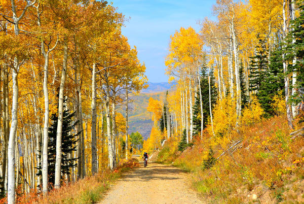 Picture for Why This Year's Fall Colors Were Especially Great in Colorado