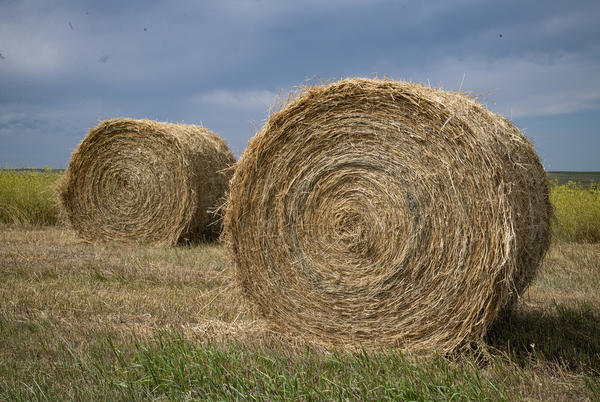 Picture for Hay hauling hours for South Dakota extended; Information available for producers in need of hay