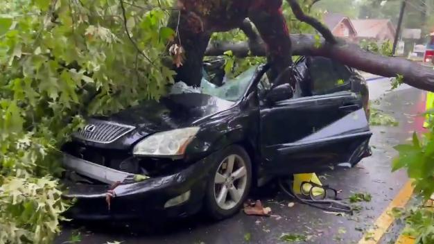 Picture for Georgia woman rescued after tree falls onto car with her in it