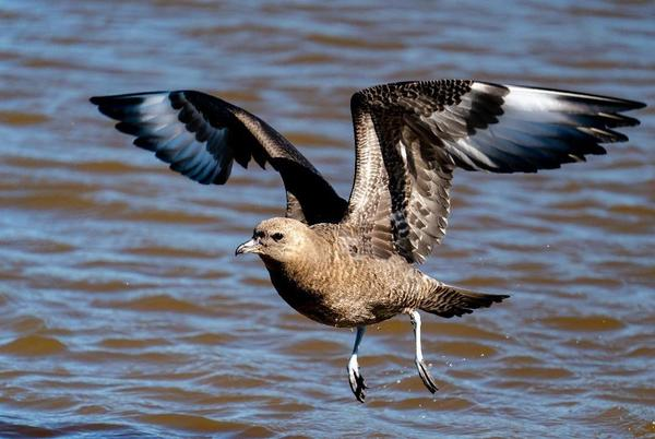Picture for LIFE AT BOOMER LAKE: Rarer than rare birds in Payne County