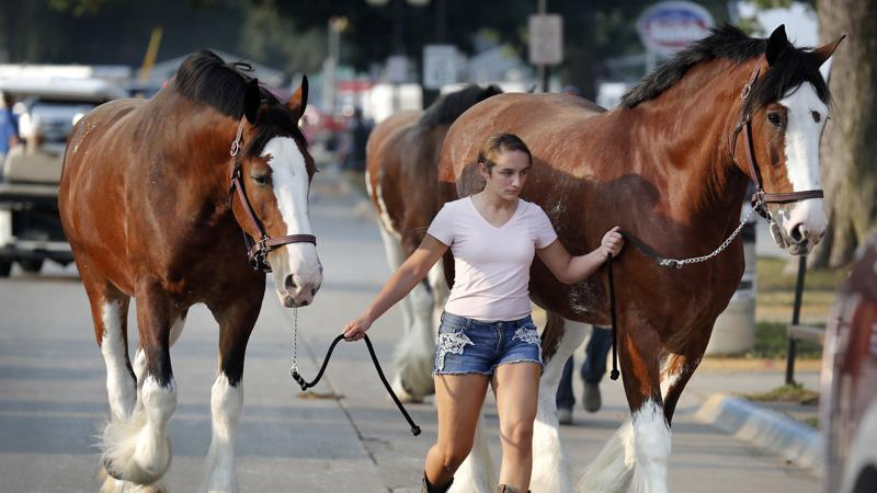 Picture for COVID-19 rates a worry as 1 million head for Iowa State Fair