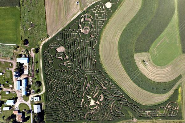 Picture for West Salem farmer earns his living between the corn rows