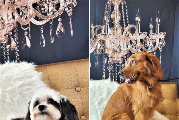 Picture for The 'Golden Age' of grooming: Waterford's new grooming salon wants your pups to feel like stars