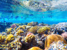 Picture for Superyacht Marina's Mission to Protect the Great Barrier Reef