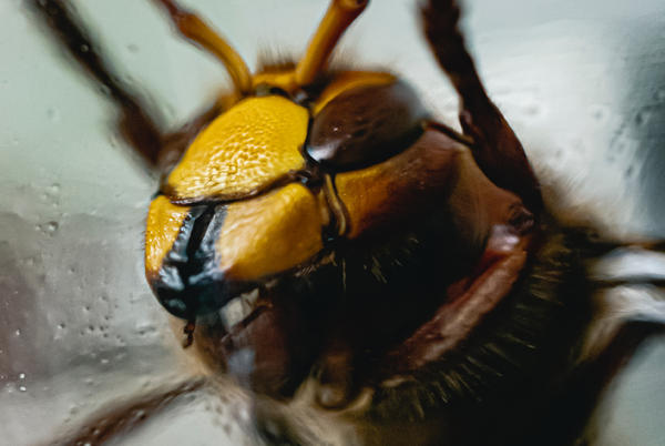Picture for Experts Warn of The Deadliest Insects in South Florida