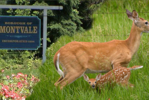 Picture for No solution on deer; Montvale supports WCL's Party City bid