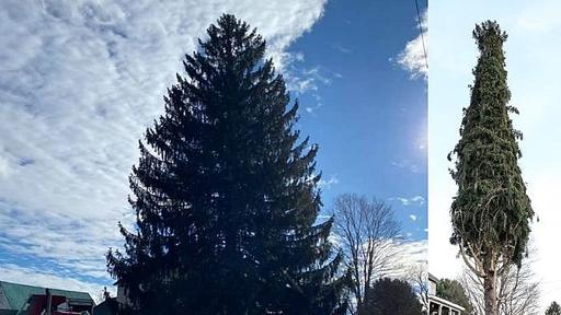 rockefeller center christmas tree ready to be cut down in oneonta news break news break