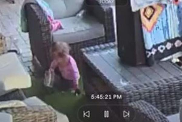 Picture for Dad panics when he sees baby playing with tarantula: Watch the video