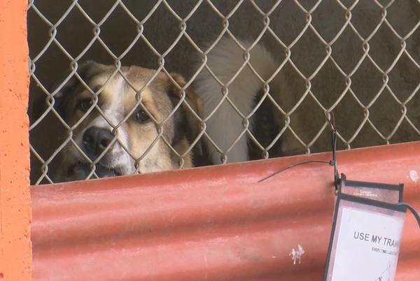 Picture for Austin Pets Alive! asks community for help to stay in the city