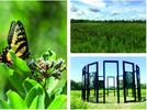 Picture for Pollinator Patch & Art Walk at Greenport Conservation Area