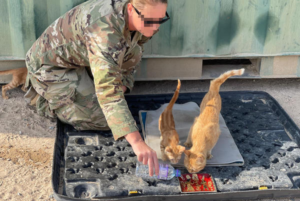 Picture for Soldier Seeking Help for Stray Mother Cat She Nursed Back to Health Named Sergeant Whiskers