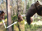 Picture for Epic Bear Fight Goes Down Feet Away from Camera Crew