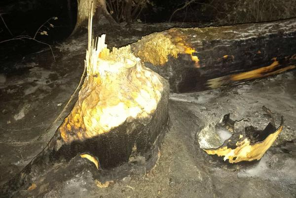 Picture for Beaver to blame for brush fire at Multnomah Falls