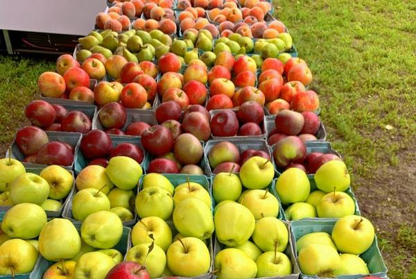 Picture for Local farmers markets offer crafts, produce