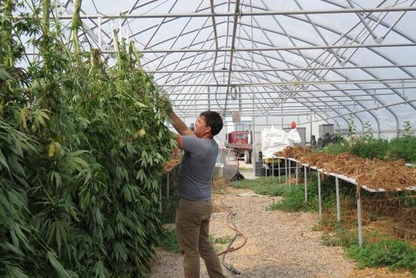 Picture for Promise of Nebraska Hemp Farming Runs Into Harsh Reality