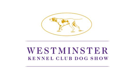 Picture for Steuben County woman competes in Westminster Kennel Club Dog Show with basset hound