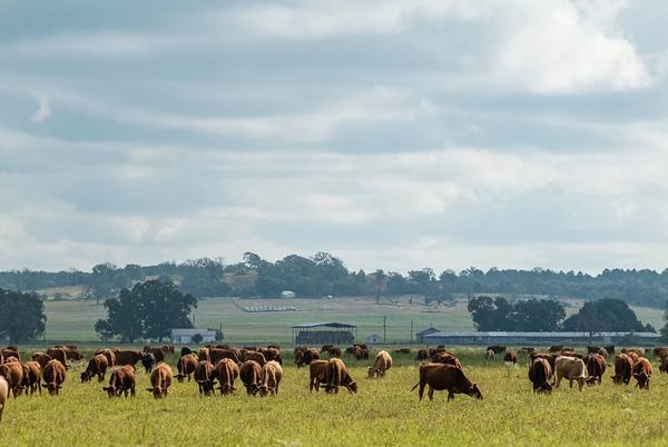 Picture for Stake your claim to a sprawling 6,000-acre cattle ranch south of Dallas