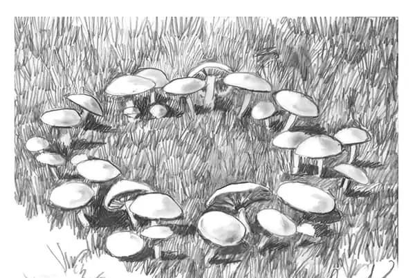 Picture for Fungi and fairy rings appear