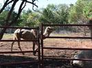 Picture for Three men charged in Oklahoma animal cruelty case