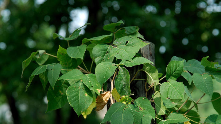 Cover for If You See This Bug in New York State, You're Asked to Kill It [PHOTOS]