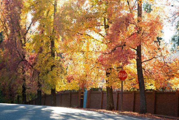 Picture for Nevada City's Fall Colors Are Pure Gold (Country)